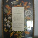 Diploma veche 1953 - Diploma/Certificat