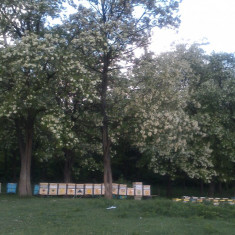Dulciuri - Producator vinde din stoc propriu miere de albine calitate deosebita