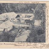 Carti Postale Romania pana la 1904 - CP clasica circulata1903, Palotailva-Lunca Bradului, jud Mures, RARA