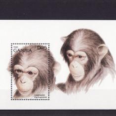 Timbre straine - GAMBIA 1996 MAIMUTE CIMPANZEI