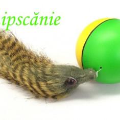 Minge distractivă Beavers Ball - Jucarie pisic, pisoi, pisica, pisici, Jucarii