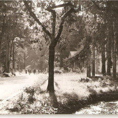 Carti Postale Romania dupa 1918, Circulata, Fotografie - CPI (B4545) BAILE MONEASA. VEDERE DIN PARC, EDITURA MERIDIANE, CIRCULATA, 22.7.1966, STAMPILE, TIMBRU