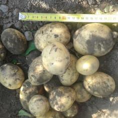 Cartofi nou de vanzara