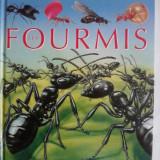 Les fourmis / R7P5 - Carte educativa