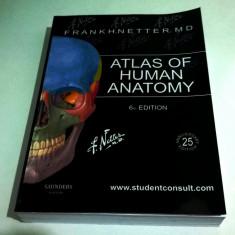 Atlas of Human Anatomy F.H.Netter 6th ed./ Atlas Netter ed.6