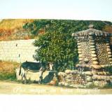 Pitoresc -  Corsica - magar - animale - Franta - 1970 - 2+1 gratis - RBK9980