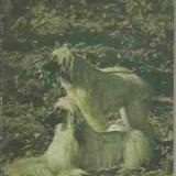 CIINII NOSTRI - BULETIN DOCUMENTAR NR. 2/1989