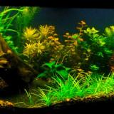 Pachet plante acvariu nepretentioase