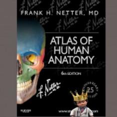 Atlas Netter ed.6 - Atlas of Human Anatomy F.H.Netter 6th ed
