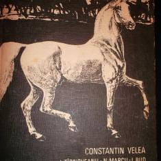 Constantin Velea , Cresterea cabalinelor