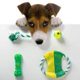 Jucării pentru Câini