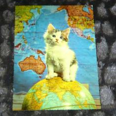 Arta - animale - pisica - glob pamantesc - harta - XXL A5 - 2+1 gratis RBK18298 - Carte postala tematica, Circulata, Printata